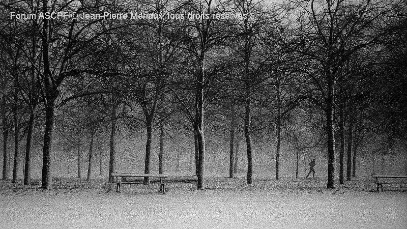 Du noir et blanc argentique dans le bois de Vincennes (j'en fait encore avec mon vieux Leica M6 …)