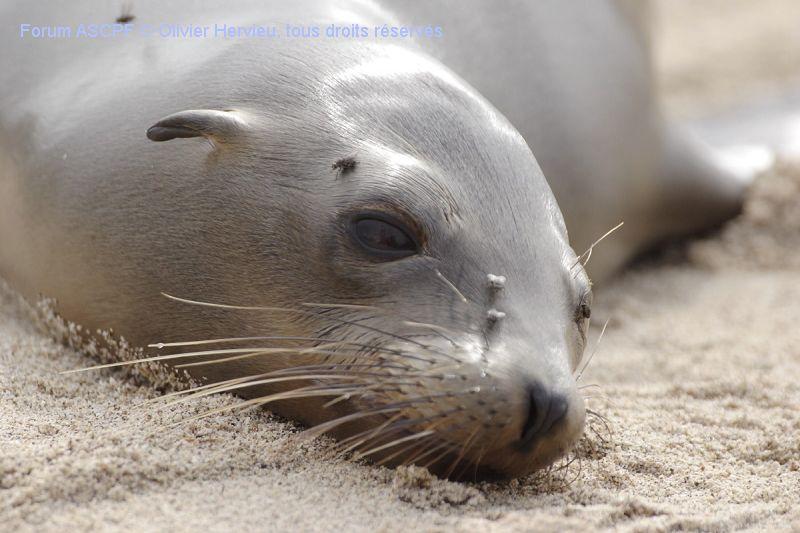 Très territoriales et donc agressives au sol où elles se sentent en danger elles sont très joueuses dès qu'elles sont dans l'eau.