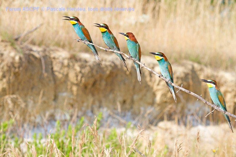 5 oiseaux devant moi et 5 oiseaux sur mon côté gauche.