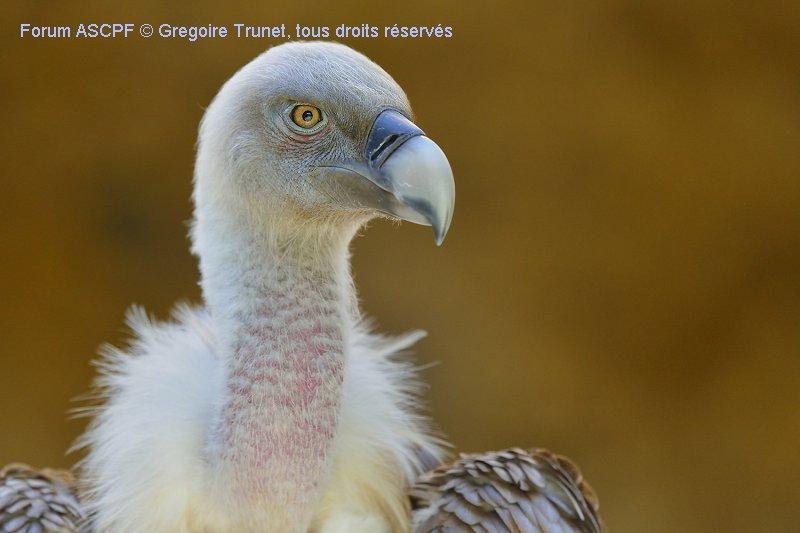 Je crois que j'ai saturé tous les membres avec mes vautours !