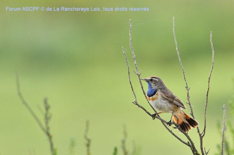 Cette photo a été prise en Vendée, en 2013. C'était la première fois que je voyais cet oiseau mythique pour moi. Magnifique instant de proximité !